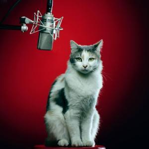 Seslendirmeevi - Voiceover Studio Finder